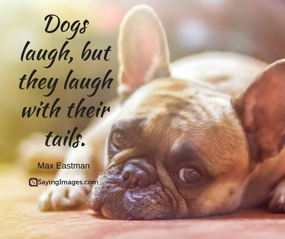 60 Inspirational Dog Quotes About Life And Love PlayBarkRun Inspiration Quotes About Dog Friendship