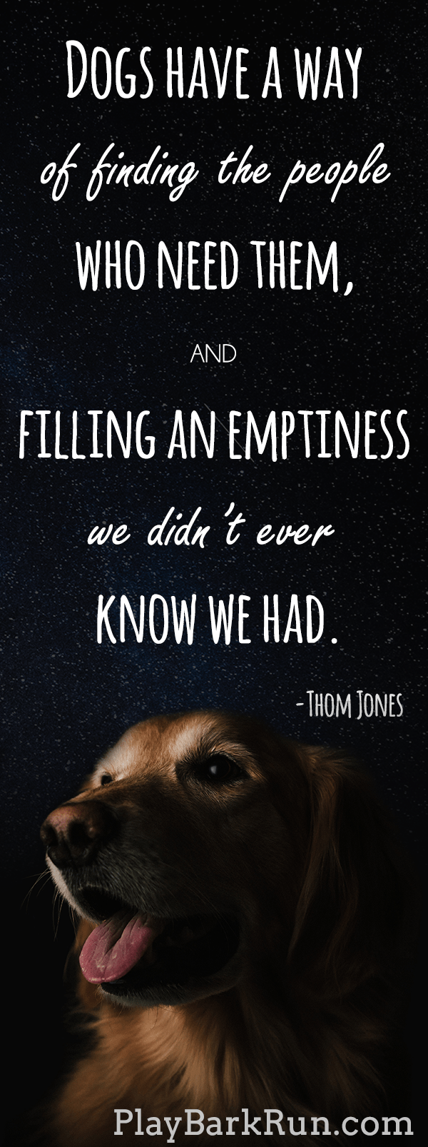 27 Inspirational Dog Quotes about Life and Love  PlayBarkRun