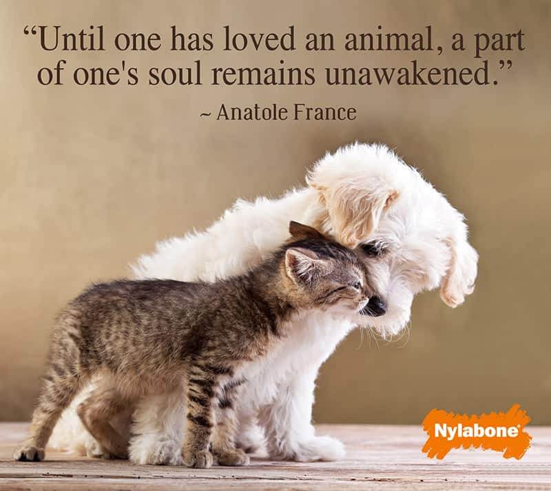60 Inspirational Dog Quotes About Life And Love PlayBarkRun Unique I Love My Dog Quotes