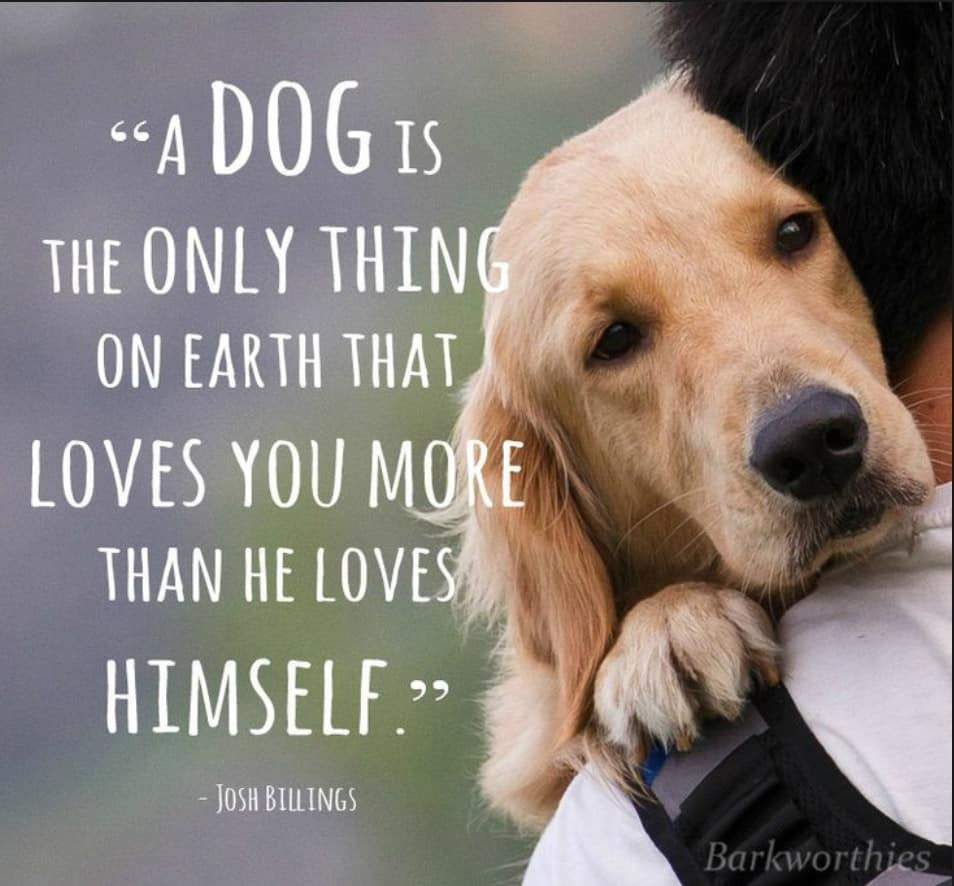 Dog Love Quotes 27 Inspirational Dog Quotes about Life and Love | PlayBarkRun Dog Love Quotes