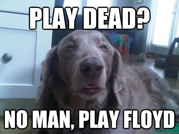 24 Hilarious Dogs With Captions To Brighten Your Day Playbarkrun