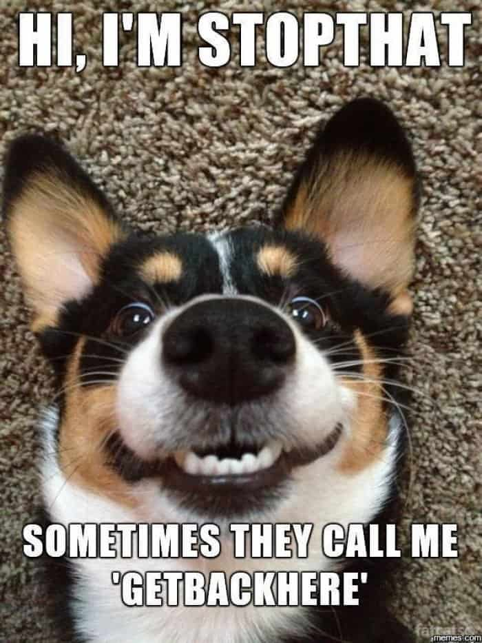 Funny Dog Quotes | 24 Hilarious Dogs With Captions To Brighten Your Day Playbarkrun