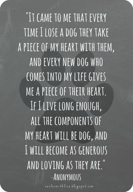 14 Dog Loss Quotes and Images to Help You Cope | PlayBarkRun
