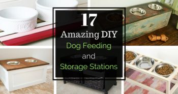 diy_dog_feeding_station