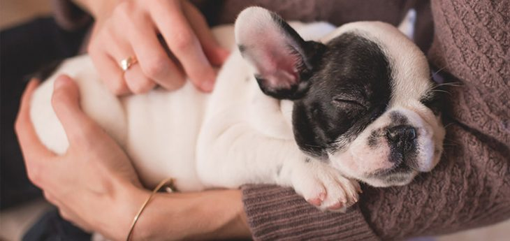 french-bulldog-names