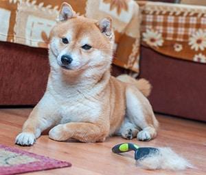 Best Brush For Short Hair Dogs Playbarkrun