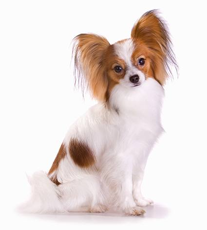 26 Low Maintenance Dog Breeds Best For First Time Owners