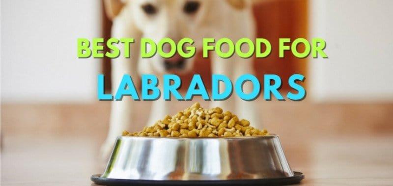 Best-Dog-Food-Labs