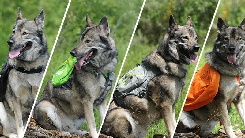 Best Backpacks Dogs