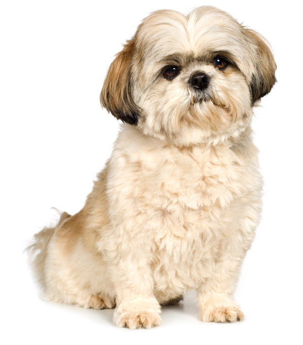 31 Dog Grooming Styles And Trims Playbarkrun