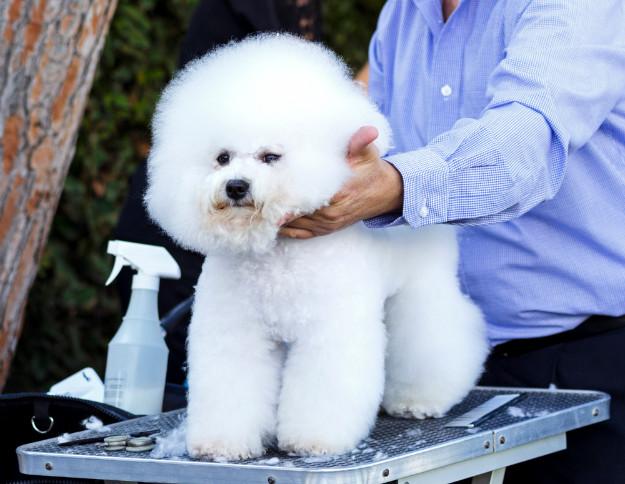 28 Fluffy Dog Breeds Big And Small Breeds Playbarkrun
