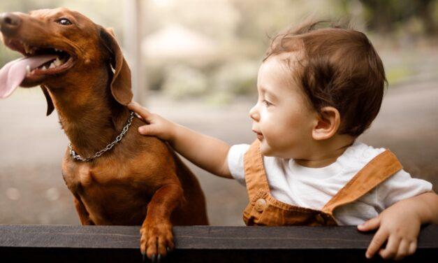 Crianças e pets: um novo membro da família