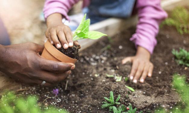 Como fazer uma horta em casa com as crianças?