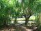 Loretta Sheehy Park