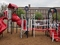 Associates for Renewal In Education, Inc. Playground