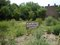 Manchester Native Plant Garden