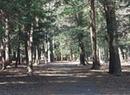 Shattuck Park