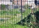 Lennox Street Community Garden