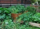 Front and Curry Community Garden