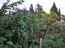 Everett Community Garden