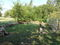 CitySquare Garden