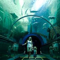 Crop 200 rayong aquarium