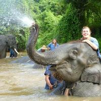 Crop 200 thai elephant home