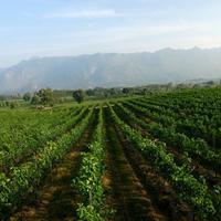Crop 200 pb valley khao yai winery