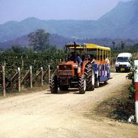 Crop 200 wine tasting tours pb