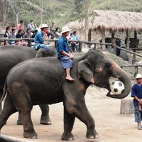 Crop 200 gay travel herald maesa elephant camp chiang mai thailand
