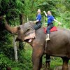 Crop 100 woody elephant training