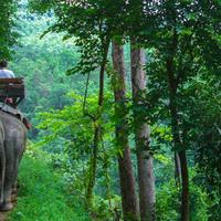 Crop 200 cnx elephant maetaman01