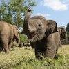 Crop 100 elephant nature park faa mai