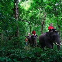 Crop 200 indochina travel day tour elephant owner for a day program patara elephant farm 3