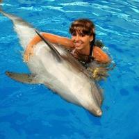 Crop 200 troy aqua dolphinarium