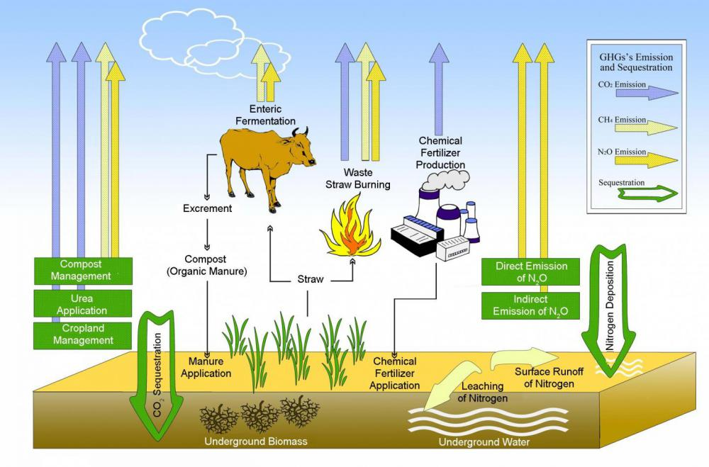Organic farming can reverse the agriculture ecosystem from a carbon source to a carbon sink | EurekAlert! Science News