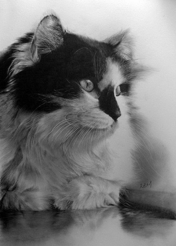 Impressive Cats Drawings by Paul Lung - Pondly