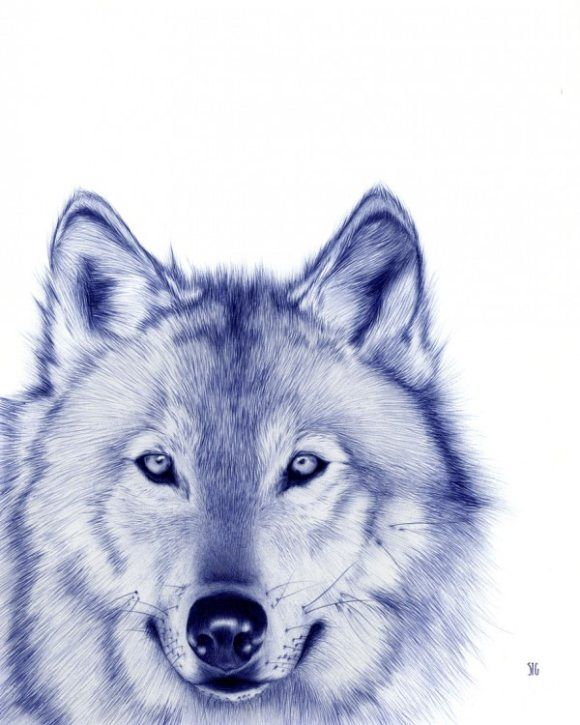 Animal Portraits With A Bic Pen by Sarah Esteje | Pondly