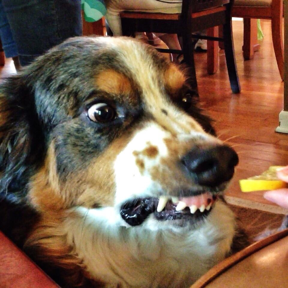 Funny Dog Pictures - 21 Adorable Reasons Why Dogs Rule