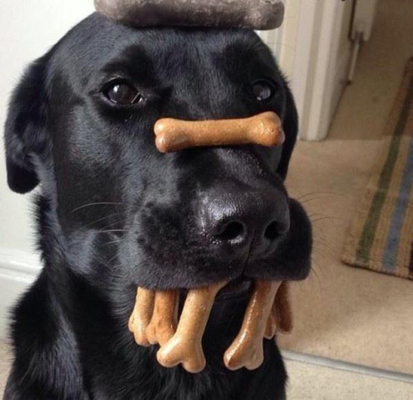 Funny Dog Pictu...