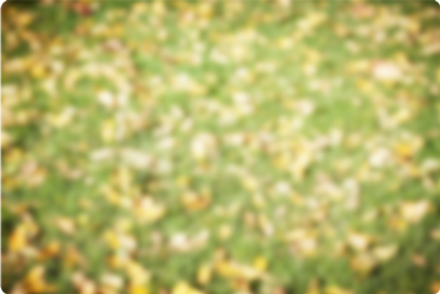 Blurry leaves on grass