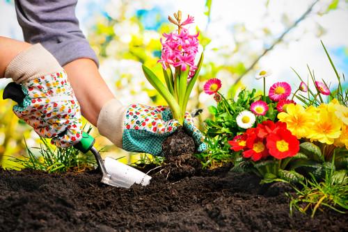No dia do Jardineiro, aprenda dicas para montar e cuidar de seu jardim!