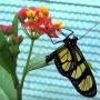 borboletário