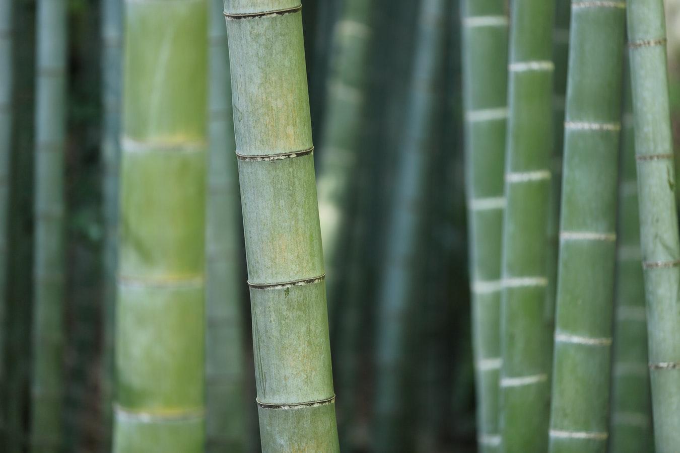 bamboo floor trim