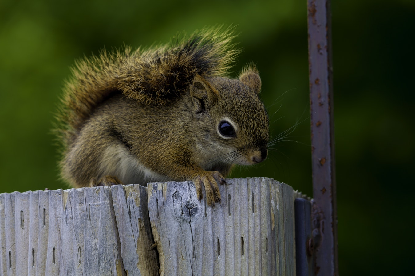 What Animal Is Living In My Attic? - Blog - Pest EZ