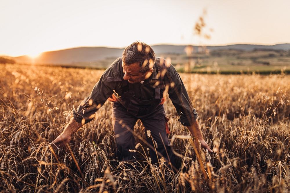 O joio e o trigo: o tempo revela quem é quem