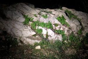 Florescendo no Monte Carmelo
