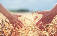 A semelhança entre o trigo e o joio