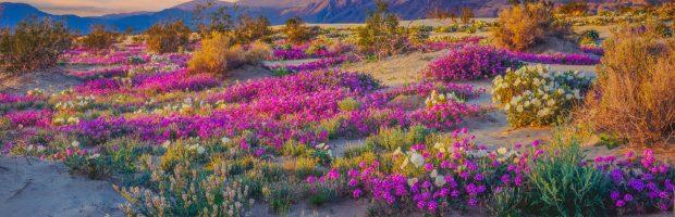 Do deserto ao jardim