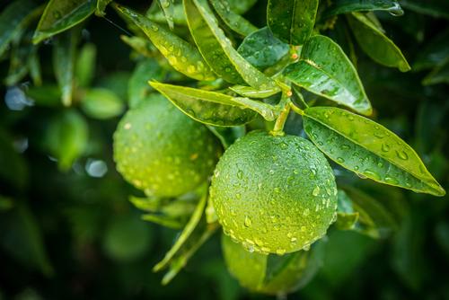 Faça do limão uma limonada – 13/02/19